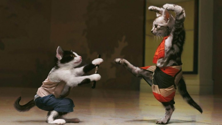 Funny Cats Fight Wallpaper